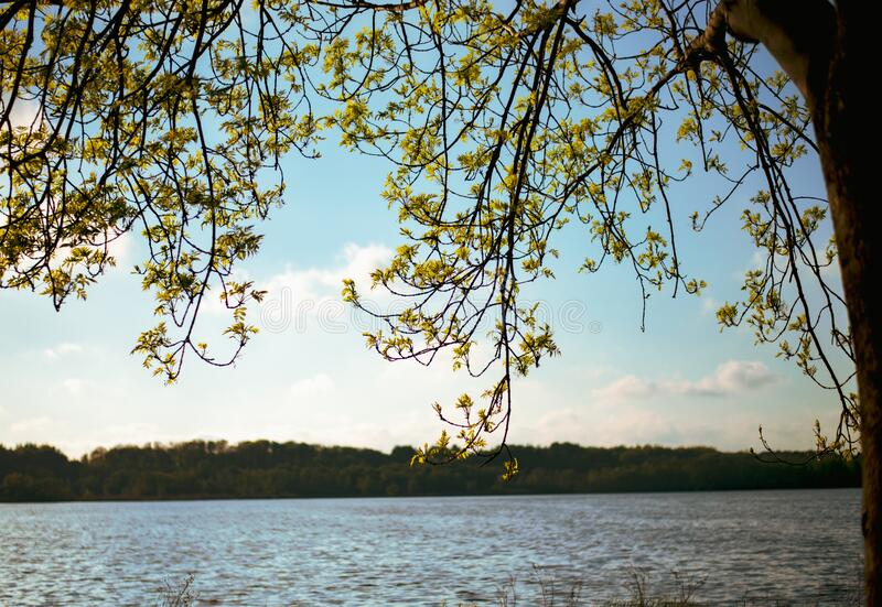 Se över vattnet till den blå himlen genom det stora trädet, naturens sammansättning. arkivfoto