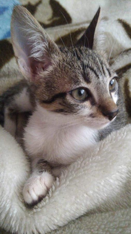 Se av en katt arkivfoto