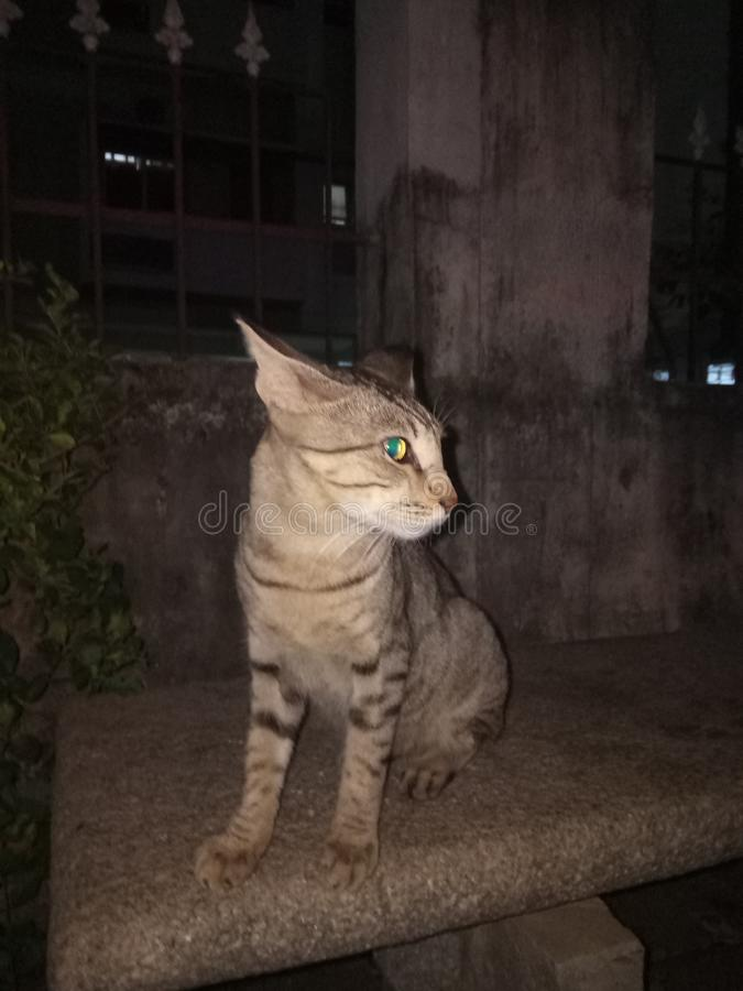 Se av katt royaltyfria foton