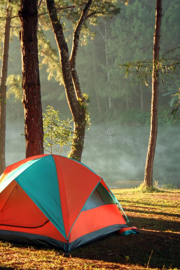 Se aventura acampar y la tienda debajo del bosque del pino, la tienda de campaña en céspedes y la laguna imagen de archivo libre de regalías