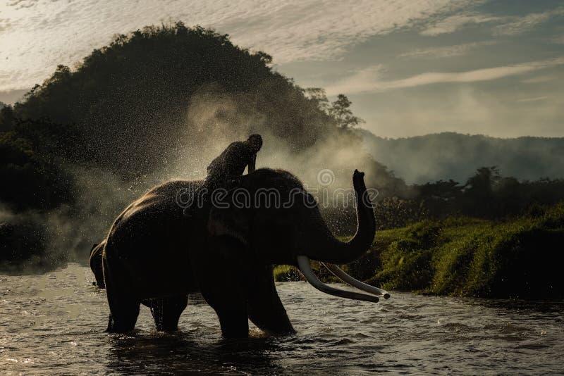 Se baigner d'éléphant photographie stock libre de droits