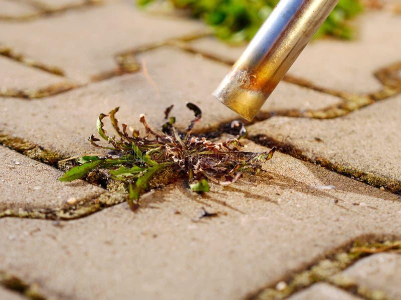 Se débarasser des mauvaises herbes photos libres de droits