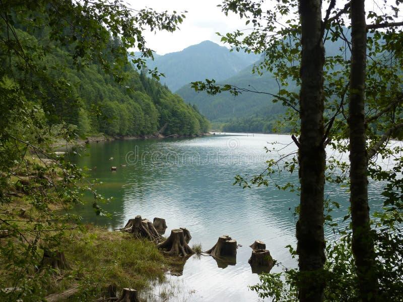 Se den sjö och träd och vaggar och sidor royaltyfri foto