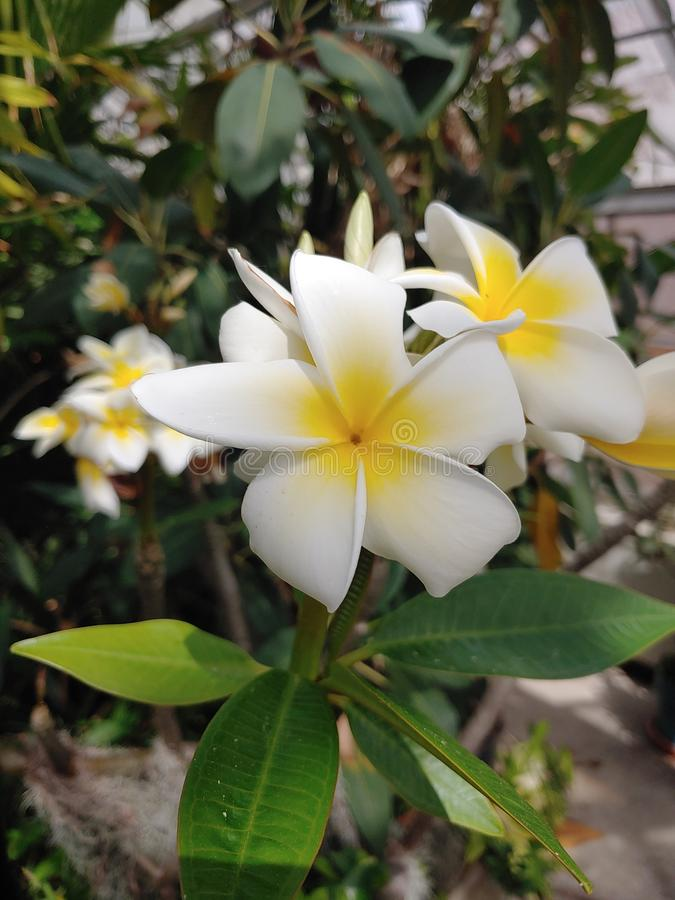 Se denna blomma royaltyfria foton
