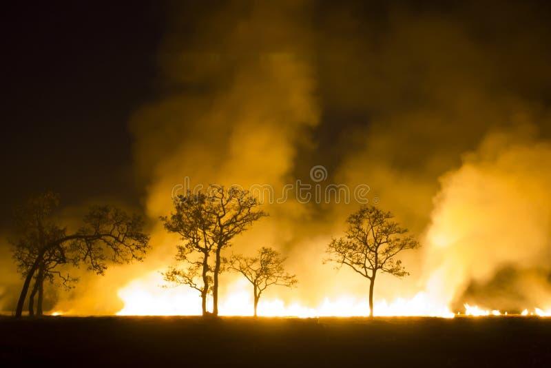 Se destruye el ecosistema ardiente del bosque del incendio fuera de control foto de archivo libre de regalías