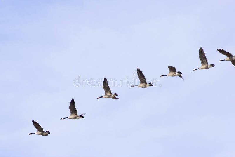 Se diriger pour un atterrissage images libres de droits
