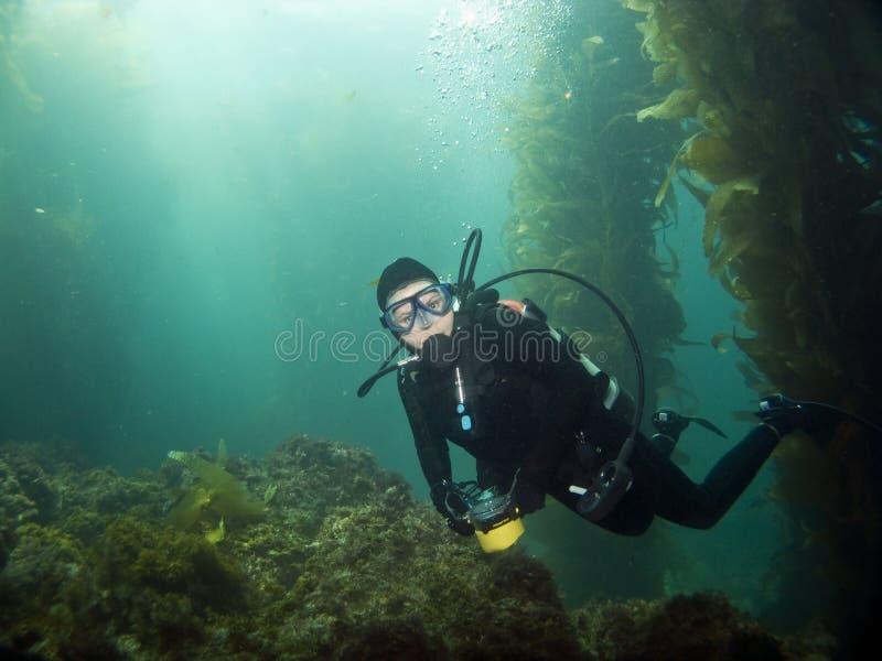 se för kameracatalina dykare arkivfoton