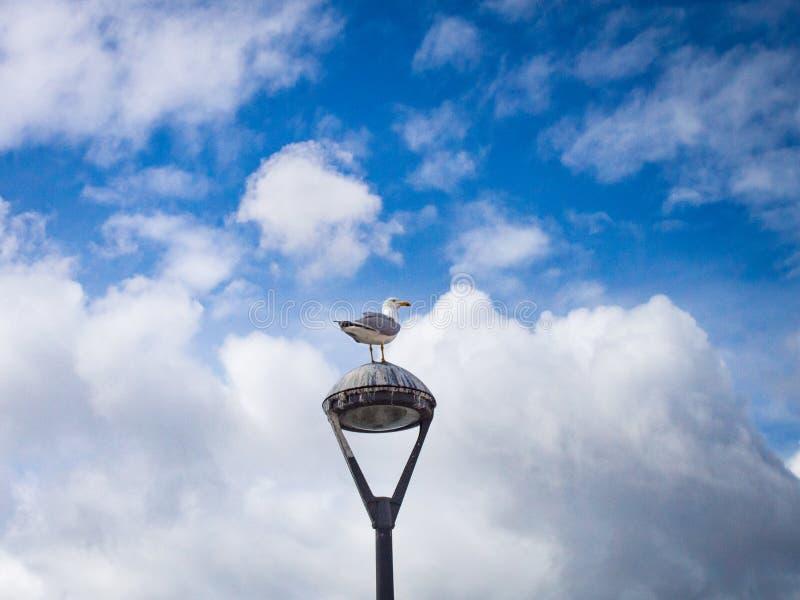 Se för Seagull fotografering för bildbyråer