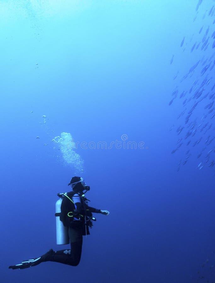 Se fisken arkivfoton