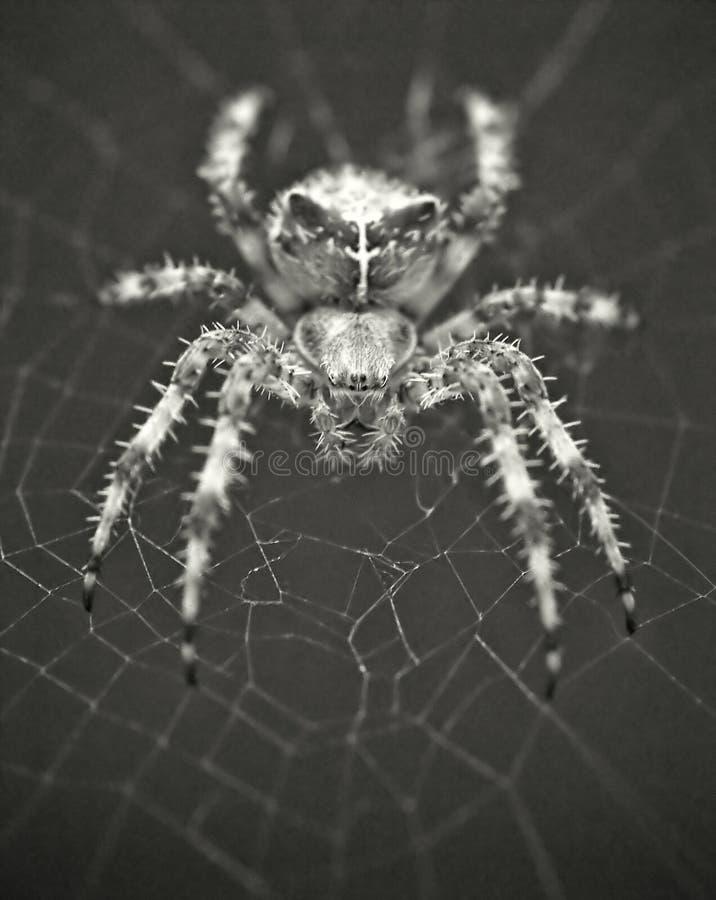 Se in i en spindels ögon royaltyfri foto