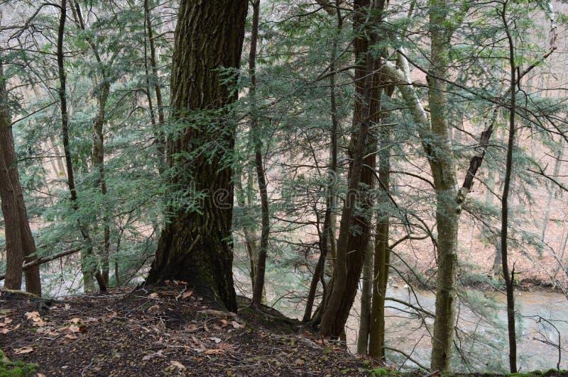 Se ner i en skog arkivfoton