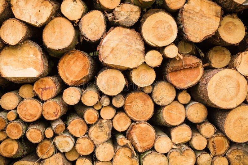 Se??o transversal da madeira, ?rvores cortadas, pilha da lenha para o fundo Feche acima da pilha do fundo dos logs imagens de stock royalty free