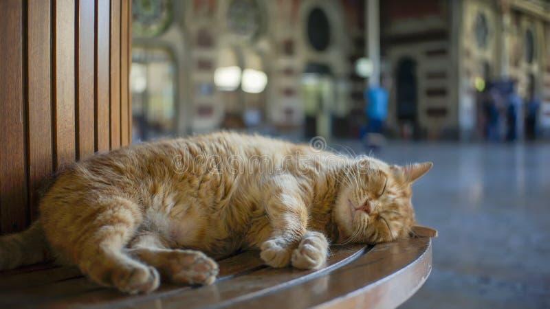 Se pierde el banco de Cat Sleeping On A en la estación de tren de Sirkeci, Estambul, Turquía fotos de archivo libres de regalías