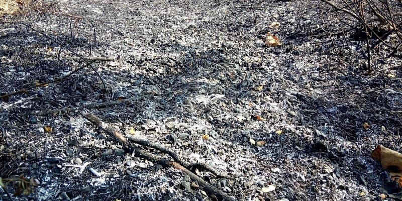 Se queman las hojas foto de archivo