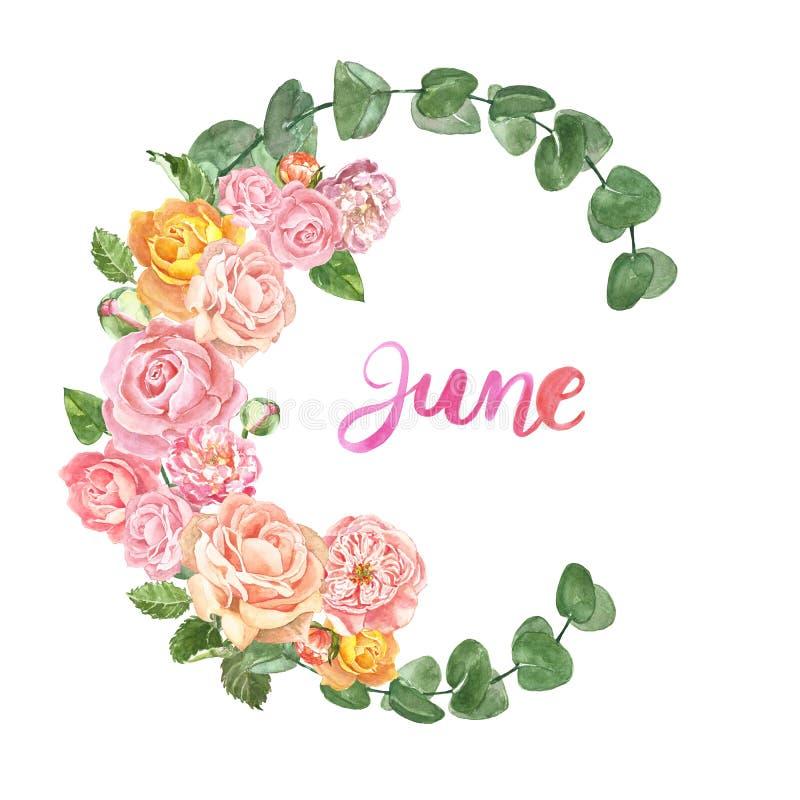 Se ruboriza la guirnalda floral rosada con las rosas de la elegancia, ranúnculo y hojas del eucaliptus, aisladas Marco decorativo stock de ilustración