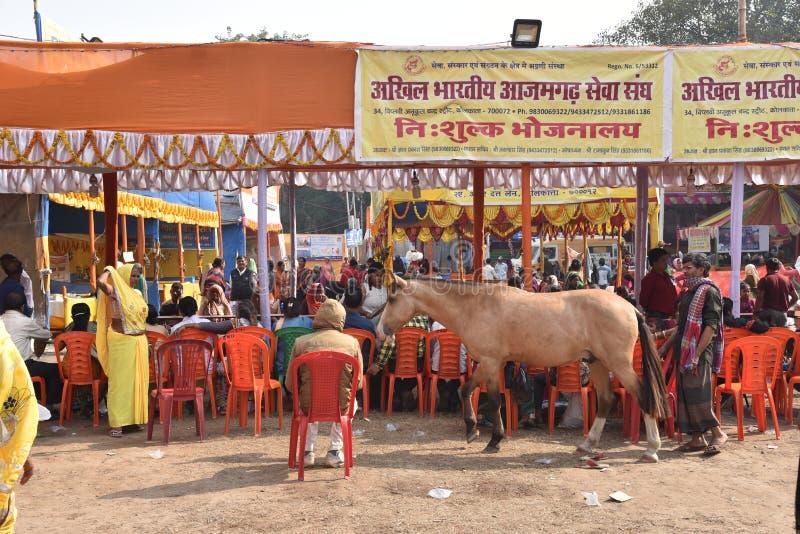 Se sirve comida a peregrinos en un campo de tránsito de camino a Gangasagar, en Kolkata imagen de archivo libre de regalías