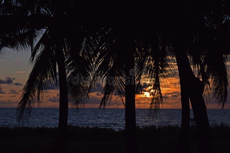 Se solnedg?ngsikten n?ra kokospalmen royaltyfri fotografi
