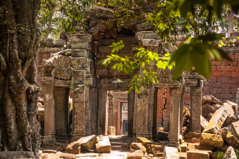 Se till och med dörröppningar in i Ta Prohm, Siem Reap, Cambodja royaltyfria foton