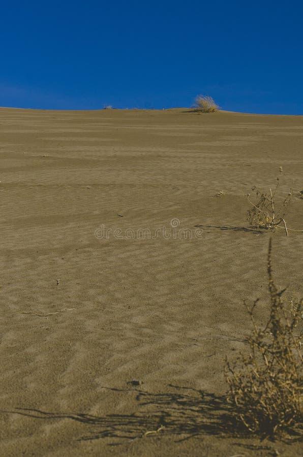 Se upp den långa stora sanddyn arkivbilder