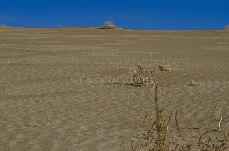 Se upp den stora sanddyn arkivbild
