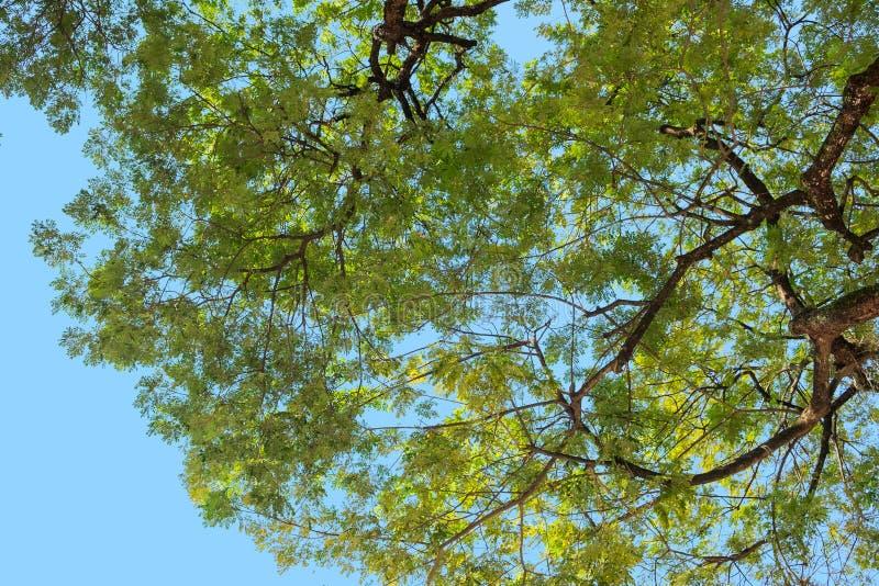 Se upp från under trädet med filialen och gräsplan sprick ut royaltyfria bilder