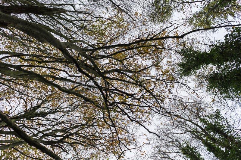 Se upp, Friston skog, East Sussex, UK royaltyfria foton