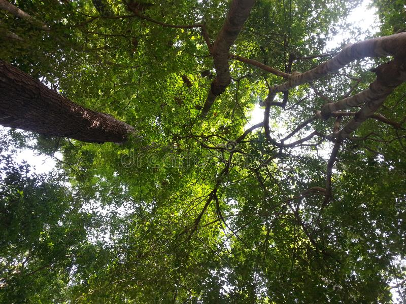 Se upp i skogen royaltyfri fotografi