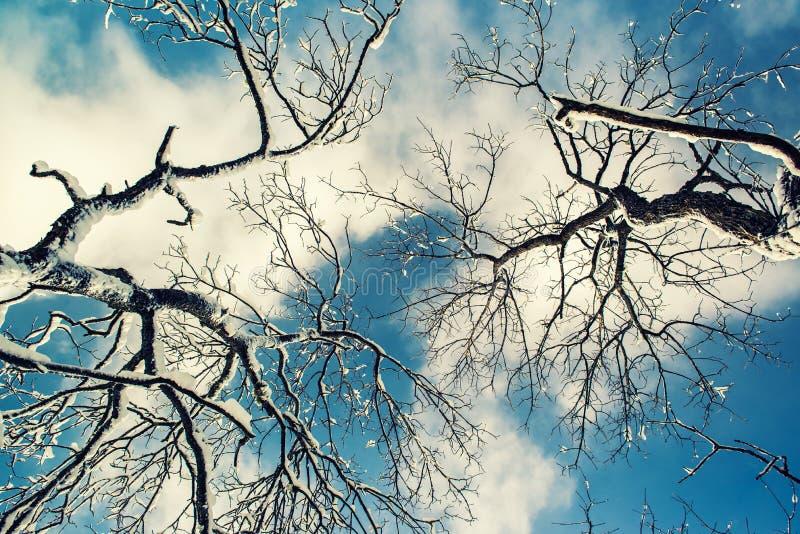Se upp på dolda trädfilialer för snö royaltyfri bild