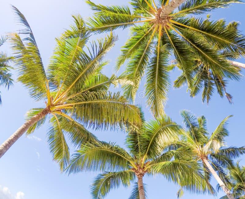 Se upp till och med guld- solsken in i kokosnötpalmträd igen royaltyfri fotografi