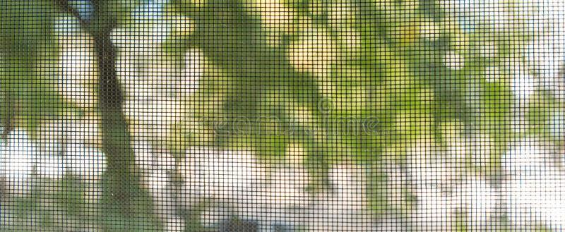 Se ut till och med skärmen på träd utanför royaltyfri foto
