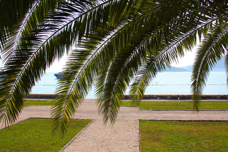 Sea through the palm leaves. In the daylight with a gravel path royalty free stock images