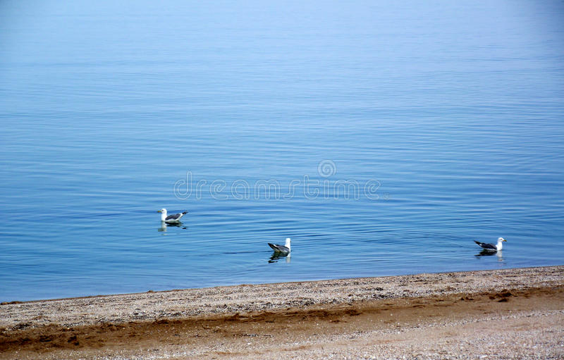 Sea of Azov. Ukraine. The city of Kirillovka. Spring warm sea and seagulls royalty free stock photos