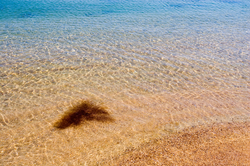 Sea background. Sea grass in transparent water royalty free stock images