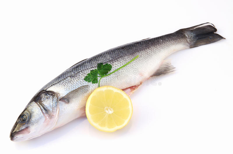Sea bass. A sea bass with lemon on white background stock image