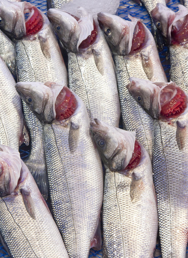 Sea bass. Fresh sea bass in the market royalty free stock photo
