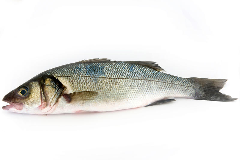 Sea bass. Fish isolated on white stock image