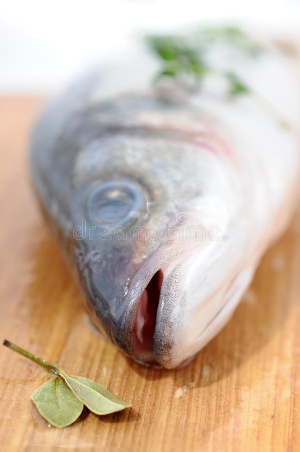 Sea bass. Fresh sea bass - focus is on jaws royalty free stock images