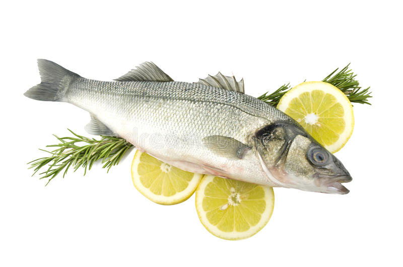Sea bass. On the white background stock images
