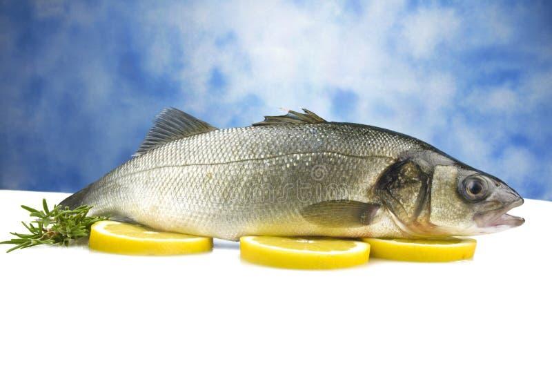 Sea bass. On the sky background stock photos