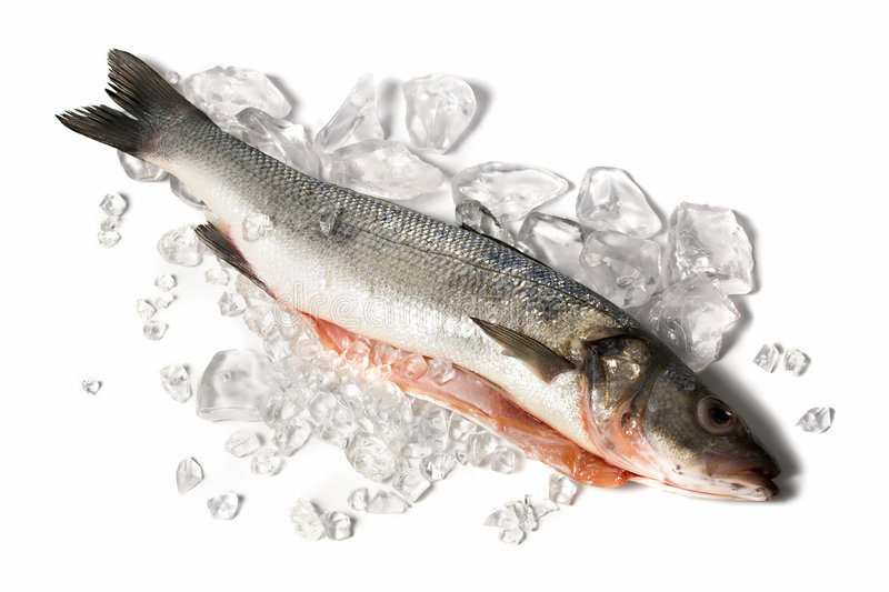 Sea bass. Loup de Mer - with crushed ice, white background royalty free stock photography
