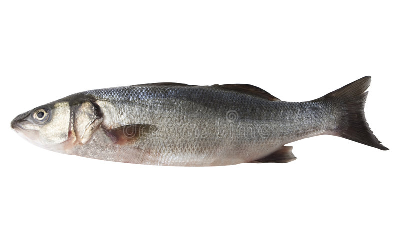 Sea Bass. Fish isolated on white with clipping path stock photos