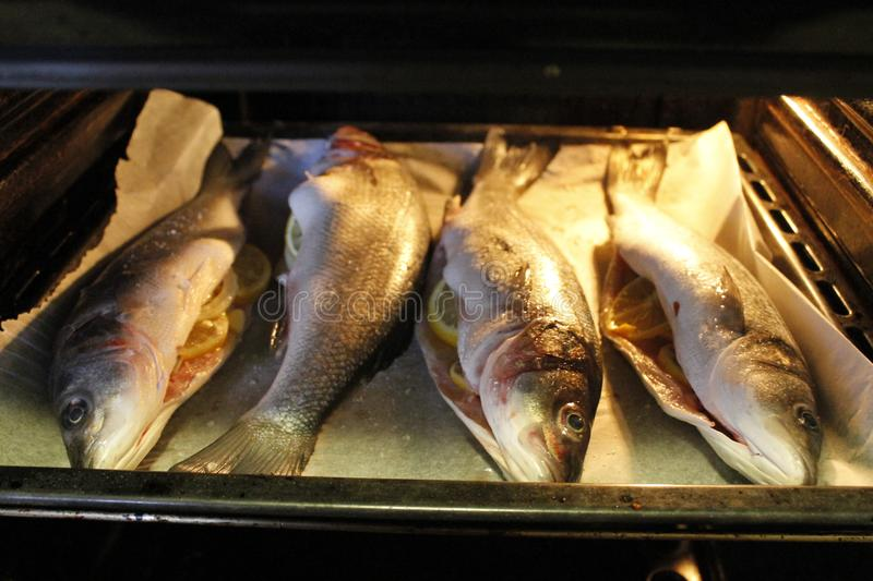 Sea bass. Cooked in the oven stock images
