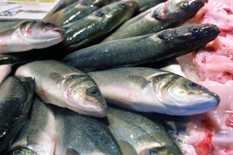 Sea bass on display. Fish market stock photography