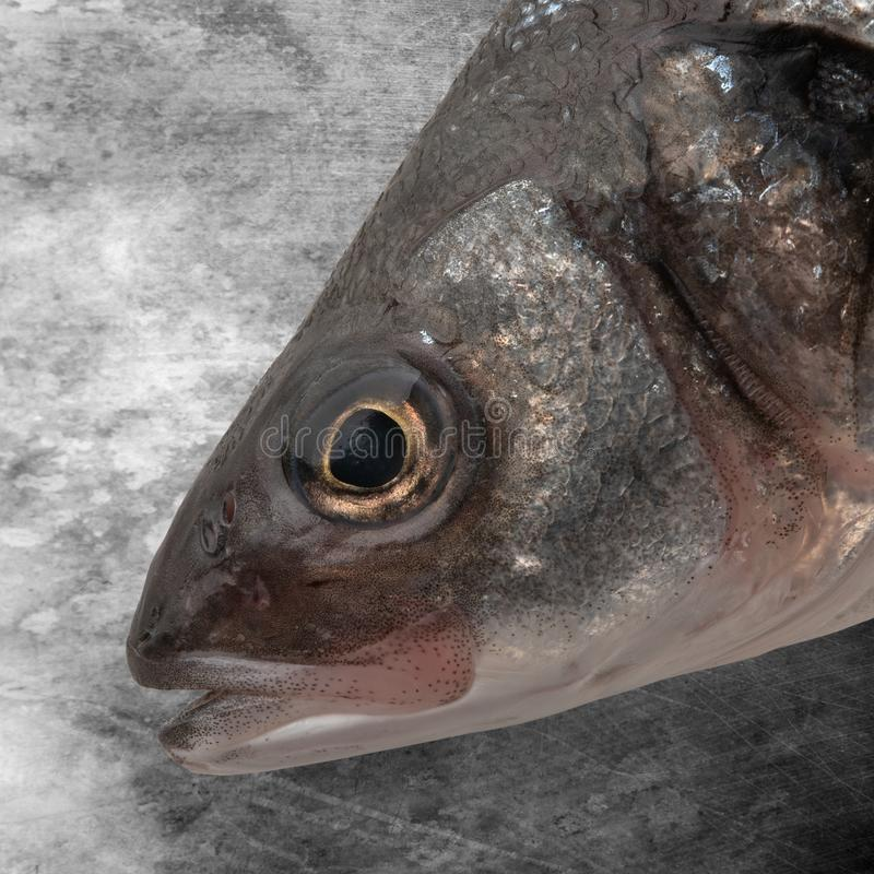 Sea bass fish head royalty free stock images