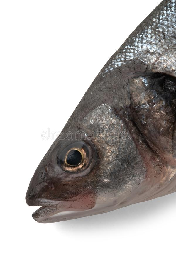 Sea bass fish head on white. Background royalty free stock image