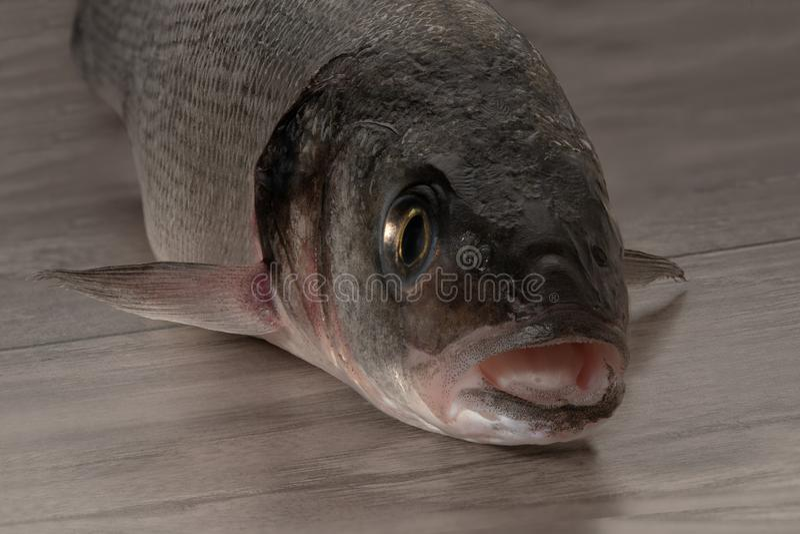 Sea bass fish head. On wooden table stock photo