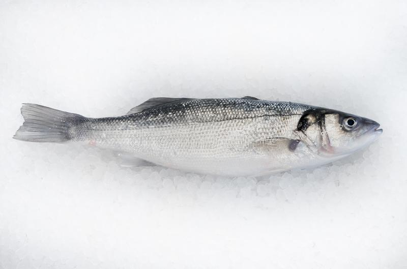 Sea Bass fish on ice royalty free stock images