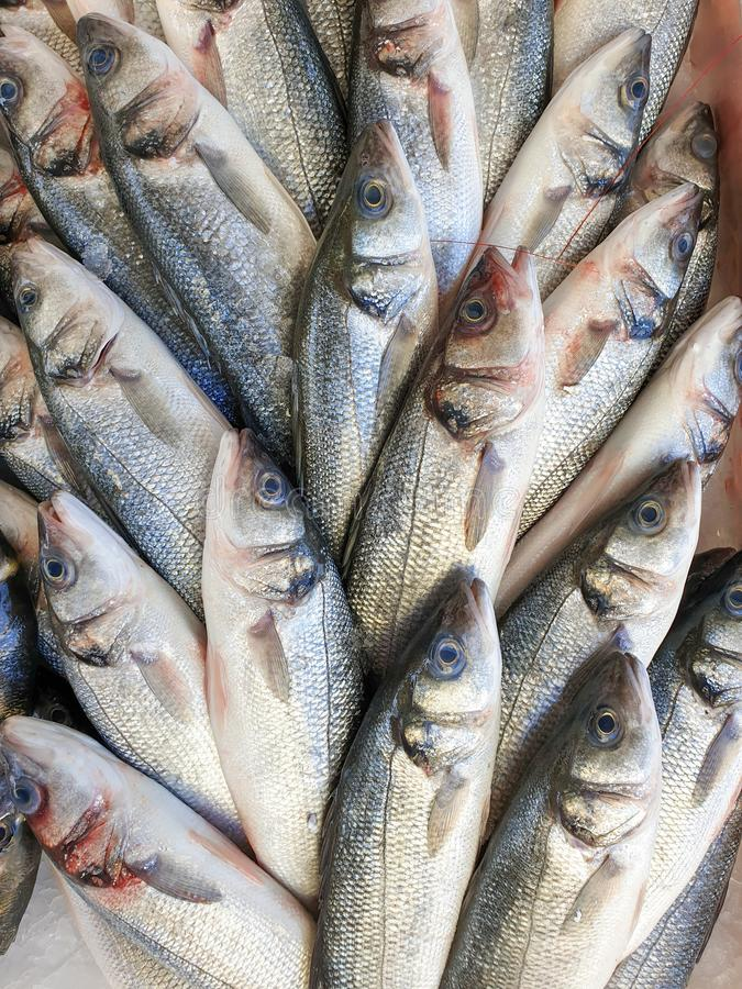 Sea bass fish on ice for sale. Many sea bass fish on ice for sale, Fish local market stall with fresh seafood,view from top stock images