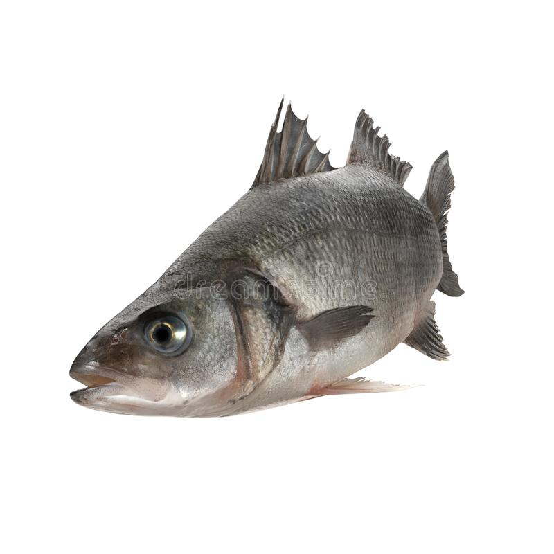 Sea bass fish. Isolated on white background royalty free stock photos