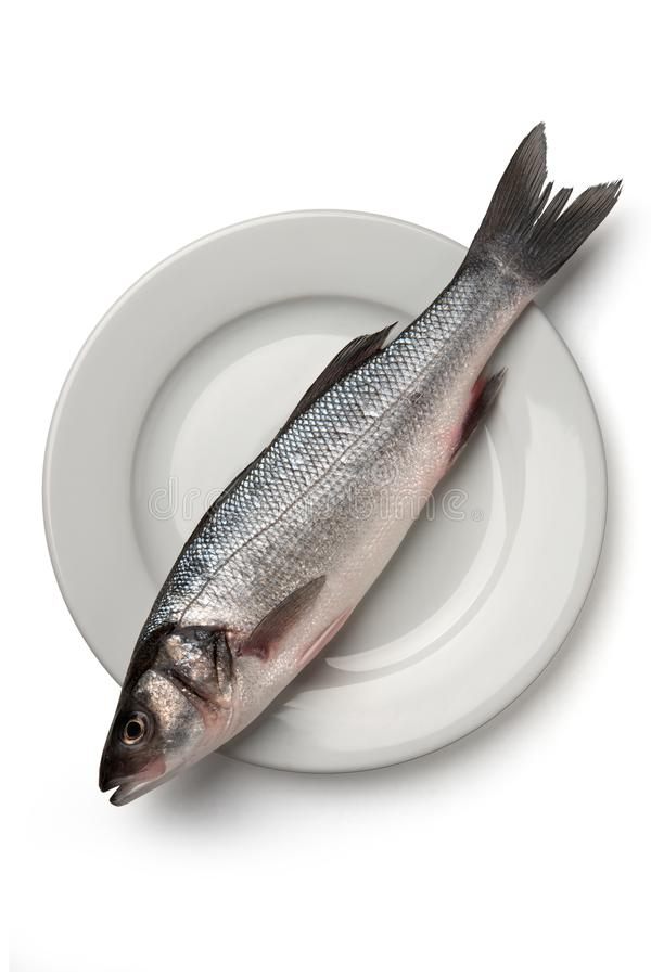 Sea bass fish. On white plate stock photo